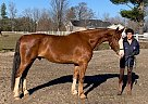 Salazar - Gelding in EdenValley, ON