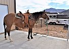 Poco Rap Cat - Mare in Prescott, AZ