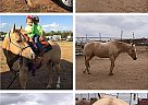 Yellow Linda - Gelding in Midland, TX