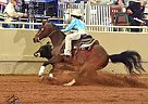 - Gelding in Seminole, OK