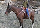 - Gelding in Lewistown, MT