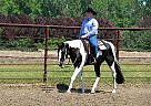 - Stallion in Kewanee, IL