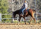 Quarter Horse Stallion for Sale in Bostic, North Carolina