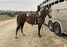 Quarter Horse Mare for Sale in Chamois, Missouri
