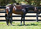 - Gelding in Milldale, CT