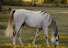 - Stallion in Greenville, GA