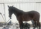 Candy - Mare in Davis, SD