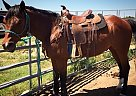 - Gelding in Manhattan, KS