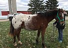 - Gelding in Saint Cloud, WI