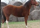 - Stallion in Patillo, TX