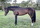 LADY - Mare in Lake Worth, FL