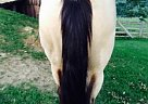 Quarter Horse Mare for Sale in Roseville, Ohio
