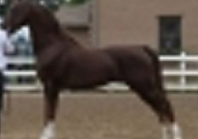 Horses for Sale in Maine ME - FREE Ads - HorseWeb