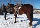 Cash - Gelding in Kadoka, SD