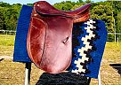Cheap Dressage Saddle!!